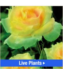 Order Live Plants, Roses, Grasses